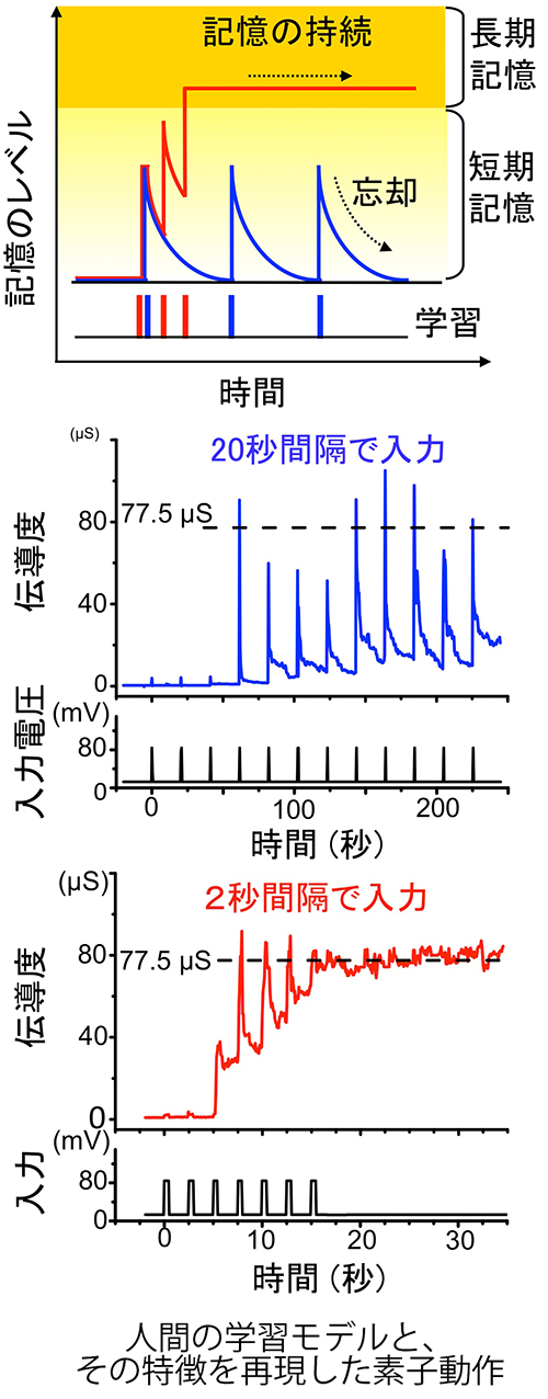 図2高精細(長谷川)